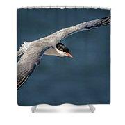 Flying Tern  4691 Shower Curtain