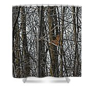 Flying Through The Trees Of The Forest Shower Curtain