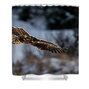Flying White-tailed Eagle Shower Curtain