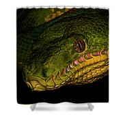 Focus - A Close Look At An Emerald Boa Constrictor Shower Curtain