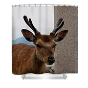 Focus Deer Shower Curtain