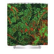 Focus Of Attention 47 Shower Curtain