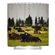 Foggy Herd Shower Curtain