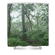 Foggy Morning In The Woods Shower Curtain