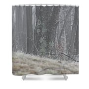 Foggy Moss Shower Curtain