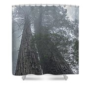 Foggy Redwoods Ca Shower Curtain