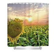 Foggy Yellow Fields 3 Shower Curtain