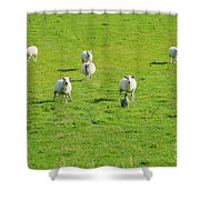 Following The Leader Shower Curtain