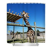 Food For Me? Shower Curtain