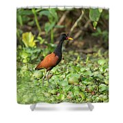 Food Hunt Shower Curtain