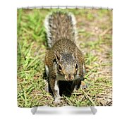 Food I Want Food Shower Curtain