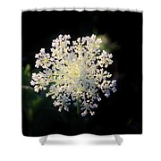 Fools Parsley  Shower Curtain