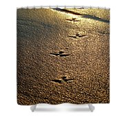Footprints - Bird Shower Curtain