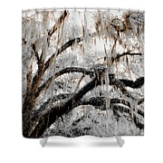 For The Grace Of The Beauty Of A Aged Tree Shower Curtain