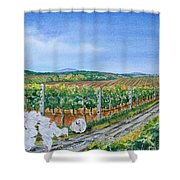 For The Love Of Chickens Shower Curtain