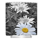 For The Love Of Daisy Shower Curtain