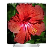 For The Love Of Hibiscus Shower Curtain