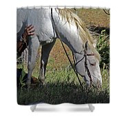 For The Love Of His Horse Shower Curtain