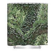 For The Love Of Trees Shower Curtain