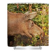 Forager Shower Curtain