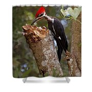 Foraging Pileated Woodpecker Shower Curtain