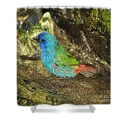 Forbes Parrot Finch Shower Curtain