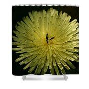 Fiore Giallo Shower Curtain