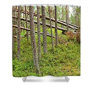 Forest After Storm - Fall Pines In Wild Forest Shower Curtain