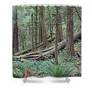 Forest And Ferns Shower Curtain