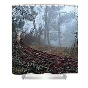 Forest And Fog In Serra Da Estrela Shower Curtain