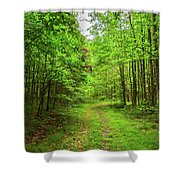 Forest Byway Shower Curtain