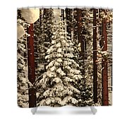 Forest Christmas Tree Shower Curtain