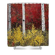 Forest Color Shower Curtain