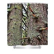 Forest Corrosion Bark Shower Curtain