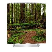 Forest Court Shower Curtain