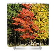 Forest Door Shower Curtain