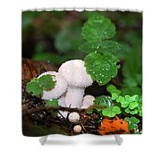Forest Fairy Tale Shower Curtain