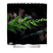 Forest Fern Shower Curtain