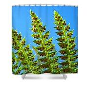 Forest Ferns Art Prints Blue Sky Botanical Baslee Troutman Shower Curtain