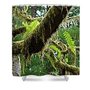 Forest Ferns Art Prints Fern Giclee Prints Baslee Troutman Shower Curtain