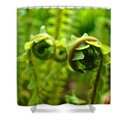 Forest Ferns Fine Art Photography Art Prints Baslee Troutman Shower Curtain