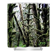 Forest Finery Shower Curtain