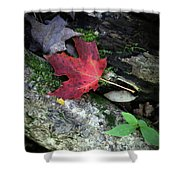 Forest Floor In Autumn Shower Curtain