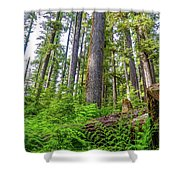 Forest Floor Of Hoh Rain Forest Shower Curtain