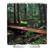 Forest Foot Bridge Shower Curtain