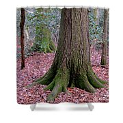 Forest Foundation Shower Curtain