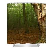 Forest Light 1 Shower Curtain