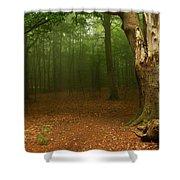 Forest Light 2 Shower Curtain