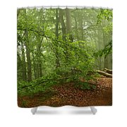 Forest Light 3 Shower Curtain