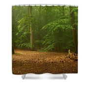 Forest Light 4 Shower Curtain